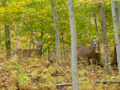 Preserve Hunting Pennsylvania/New York | Adam Hill Hunting